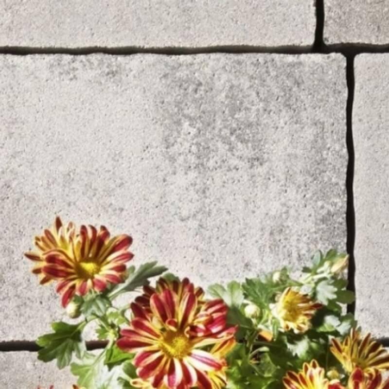 Kwiat z kostką brukową w tle